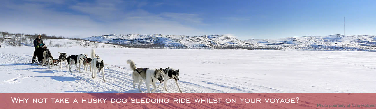 Enjoy a husky dog sledging experience whilst in Norway.